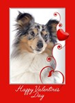 Blue Merle Sheltie Cards