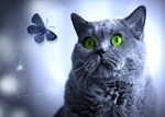 Blue and the Butterfly