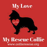 My Love My Rescue Collie
