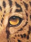 In a Jaguar's eye