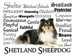 Tri-Color Sheltie Traits