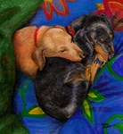 Dachshunds!