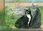 Tuxedo and tabby cats
