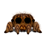 Tigger the Jumping Tiger Spider