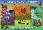 Monarch & Native Milkweed