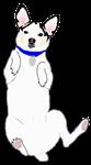 Meiklo dog on his back