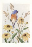 Bluebird with BlackEyed Susans