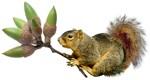 Squirrel Acorn Bouquet