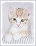 Yellow Tabby Kitten