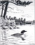 Loon by Island