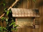 Florida backyard birdfeeder