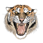 Awesome Tiger