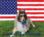 Love 'em and Leave 'em Pet Sitting 4th of July Col