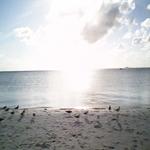 SUN GLORY AT THE BEACH