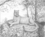 Mountain Lion by Marc Brinkerhoff.