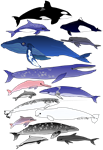 15 dolphins and whales