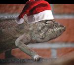 Christmas Lizard Santa Claus