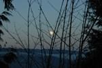 Burnaby Moon