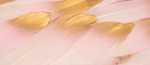 Gold Tipped Pink Feathers