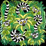 Lemurs of Madagascar on Rainforest
