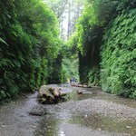 Fern Canyon