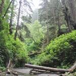 Fern Canyon Redwoods