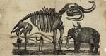 Missourium Theristrocaulodon