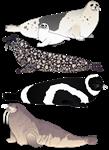 Four species of Arctic seals
