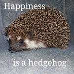 Happiness is a Hedgehog