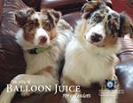The Pets of Balloon Juice 2019 Calendar