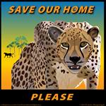 Save Our Home Cheetah A
