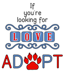 Looking for Love? Adopt