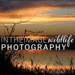 In The Image Wildlife Photography