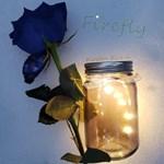 Firefly Cover Art