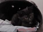 Baby Cleo