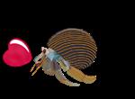 I Heart Hermit Crabs