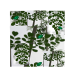 MOSAIC COLLAGE OF MORINGA OLEIFERA TREE WITH EMERA