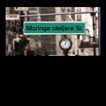 MORINGA OLEIFERA ST.