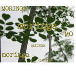MOSAIC COLLAGE OF MORINGA OLEIFERA TREES