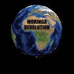 MORINGA REVOLUTION