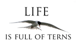 Life is Full of Terns