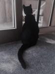 Black Cat at Screen Door