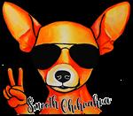 Smooth Chihuahua