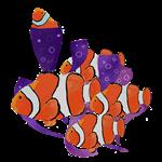 Clown Fish being Clowns