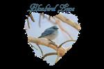 Bluebird Love