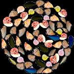 Sea Shells and the Sea