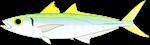 Jack Green Mackerel