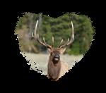 I Love Elk