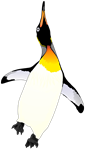 Dancing King Penguin