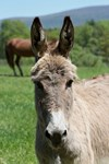 Jasmine, Our Donkey